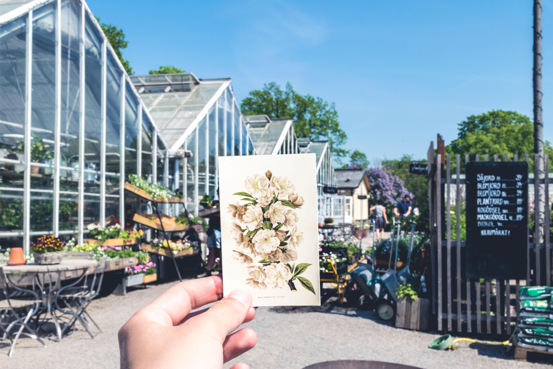 Зеленый оазис Стокгольма — Djurgården