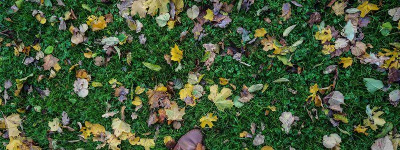Осенняя фотосессия в Стокгольме