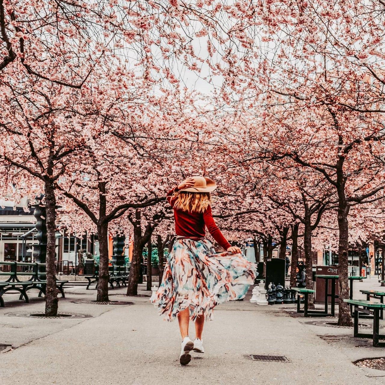Где посмотреть цветение сакуры в Стокгольме